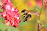 Blumen-Foto (TEST)