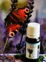 Ätherisches Lavendelöl - Lavendel angustifolia