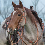 Country Headstall