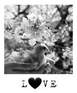 L♥VE b/w