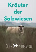 Broschüre: Die Kräuter der Salzwiesen