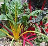 Poirées multicolores