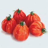 tomate borsalina