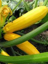 Courgette jaune (1 kg)