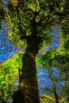 Tree 488