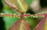 Diagnose und Pflanzenschutzmittel