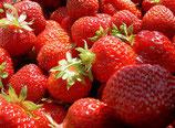 "Erdbeere ""Polka"" im 7cm Topf / Profiqualität"