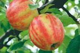 Apfel Karneval 125-150cm gross