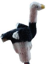 Vogel Strauß / Bird ostrich