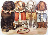 PS Greeting Cards MS CA141 Sircus Dogs
