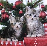 X'mas4中 X33 33314670 Christmas Kitten