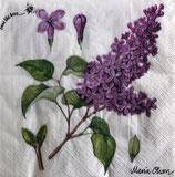 SI15中 F66 177104 Lilac