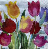SP小5 F38 C898100  Poweful Tulip
