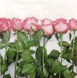 SP小1 F25 DC-CN0495 Roses in arow