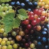 SI14中 F10 L829800 Grapes