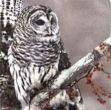 SI8中 F30 611519 Snow Owl