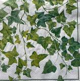 SI17中 F61 L546190 Ivy Ornaments White
