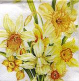 SP7中 F35L570700 Yellow Daffodils