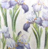 SP小3 F35 C729860 Blue Iris cream