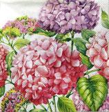 SP小 F33 SC-537395 Hortensia Pink
