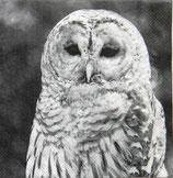 SI8中 F30 13308115 OWL