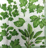 A中 F52 *14670L Herb Garden