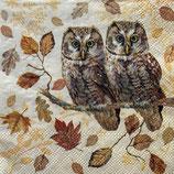SP小5 F70    12515460 Owl  Couple