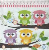 MCH中 F70 SDOG022601 Cute Owls