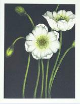 s.e.hagarman G-27 多目的カード(blank inside) 「ポピー Black」