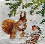 SPX小2 X30 3253846 Squirrel &Robin