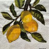 SP小5 F14 1253779 Lemon Musee  white
