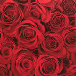 SI14中 F132 185683 Red Roses