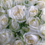 SI14中 F132 21454 White roses
