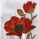 SI11中 F03 L522390 Red Poppy white