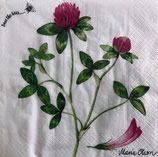 SI15中 F66 177072 Red Clover