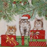 X'mas 3中 X38 33311035 Three Cats