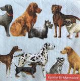SP小5 F108 C891849 Dogs ライトブルー