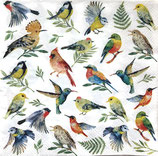 SI11中 F13 13311825 BIRDS VOTES