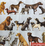 SI16中 F108 L891849  Dogs ライトブルー