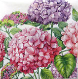 SI中2 F07 SP-537395 Hortensia Pink