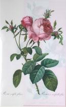クリアファイル「ルドゥーテのバラ」*P004-02