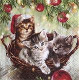 SPX小1 X38 32511975 Cats in basket