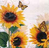 SP小 F108 C12510115 Sunny Butterfly