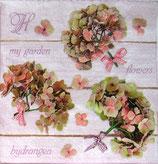 SI10中 F33 SDOG018901 Hydrangea Flowers