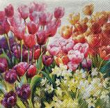 SP小5 F38 12514960 Tulips