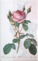 クリアファイル「ルドゥーテのバラ」*P004-01