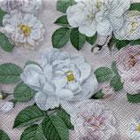 SP小5 F23 112124 La Rosa  rose