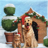 SPX小1 X35 C707400 X'mas Dog and Cat