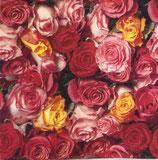 SI15中 F132 344039 Rosas Colorida