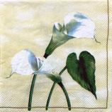 SI8中 F26 V-L6260 Arum Lily
